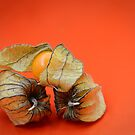 Orange Beauty by patcheah