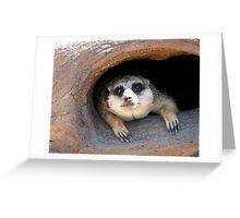 Meerkat posing from a Tree Stump  Greeting Card