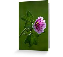 Feeling Mallow After the Rain Greeting Card