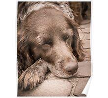 Shishka-Dog Sleeps Poster