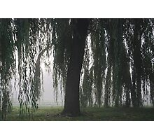 Foggy Willow Photographic Print