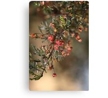 Small and Unusual Canvas Print