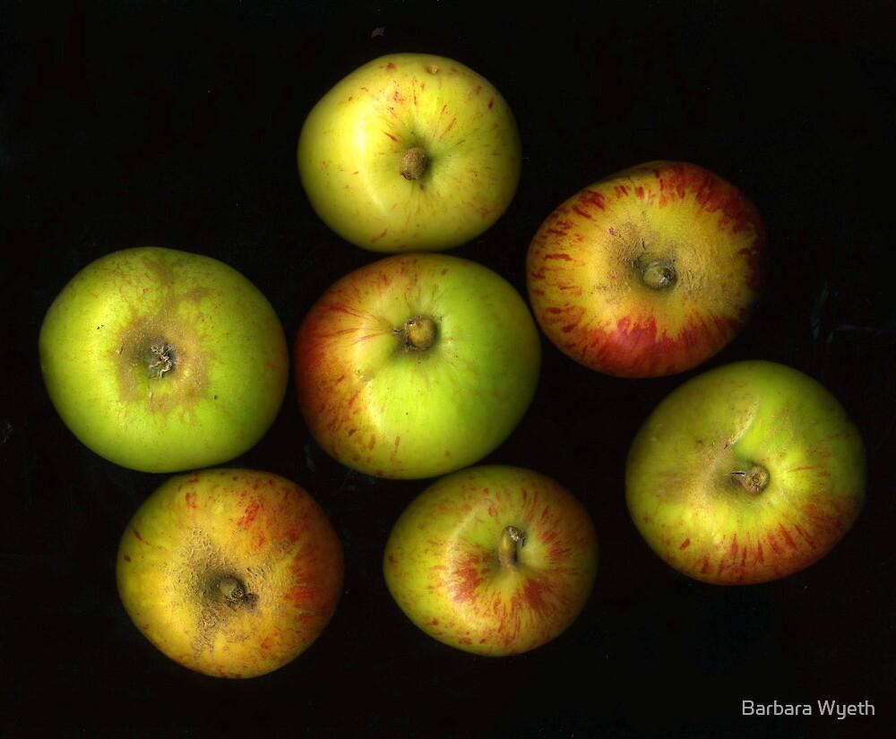 Backyard Apples by Barbara Wyeth