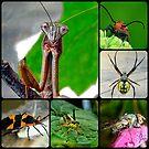 """Bug Bites"" by Gail Jones"