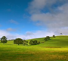 Nannup Greenery by Adam Brice