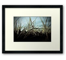 Bethells beach dune grass, Auckland, New Zealand Framed Print