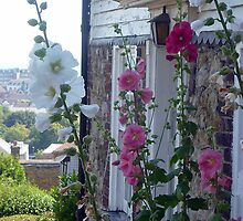 Hollyhocks By English Cottage by Antoinette B