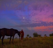 Luna Equines  by Penny Kittel