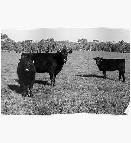 Cows 1 Poster
