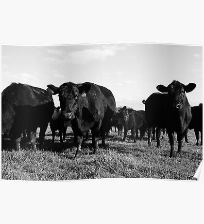 Cows 2 Poster