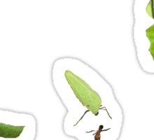 Leaf Cutter Ants Sticker