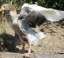 Goose by Paul Hutcheon