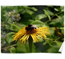 Yellow Flower with Insect Poster