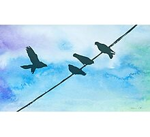 Doves on wire Photographic Print