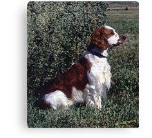 Irish Red & White Setter Dog Canvas Print