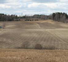 Farmland. Springtime. Ås, Norway. by UpNorthPhoto