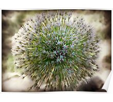 Abstract Flower zoom focus photography Poster