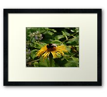 Yellow Flower with Insect Framed Print