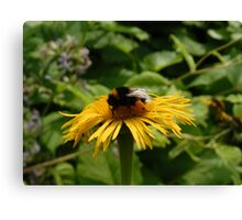 Yellow Flower with Insect Canvas Print