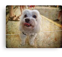 Precious Pup Canvas Print