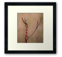 Four Spotted Chaser Framed Print