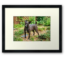 The Pigeon-Toed Patterdale Princess Framed Print