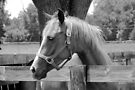 Sweet Equine Face b/w by AuntDot