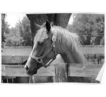 Sweet Equine Face b/w Poster