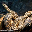 Snakes Alive by Rick Playle