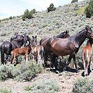 Wild Horse Family Reno Nevada USA by Anthony & Nancy  Leake
