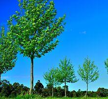 green on blue by metriognome