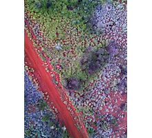 Colours of the Red Center Photographic Print