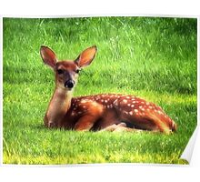 Whitetail Fawn Poster