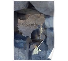 cat in ruins Poster
