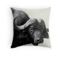 Water Buffalo - Thornybush NP South Africa Throw Pillow
