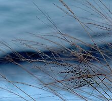 Wind in the Willows by Thomayne