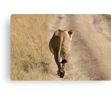 I am walking - lion Canvas Print