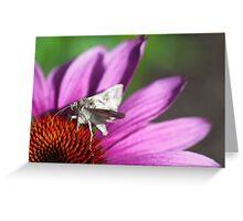 Silver Y Moth Greeting Card
