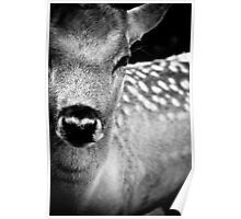 Oh Dear, Oh Deer. Poster