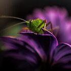 Purple Surprise by yolanda