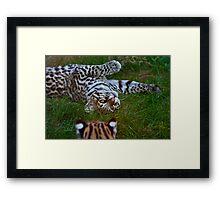 Just Another Cat (Ocelot) Framed Print