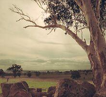 Eldorado Gumtree by Linda Lees