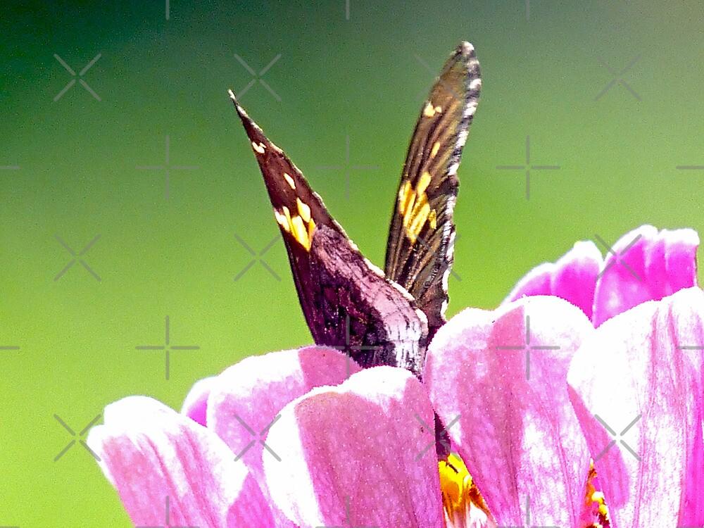 Butterflies are self propelled Flowers by Susan S. Kline