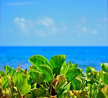 Beach Foliage by Missy Lamb