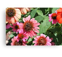 Summer Fun- Coneflower Canvas Print