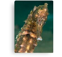 Dark spotted seahorse - portrait Canvas Print
