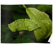 Plant with Waterdrops Poster