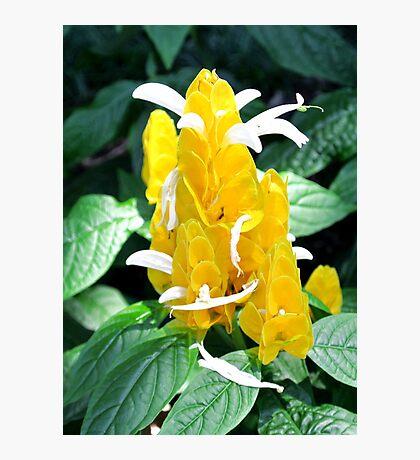 Unique Yellow Flower Photographic Print