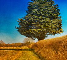 Yew Tree by JulieCoe