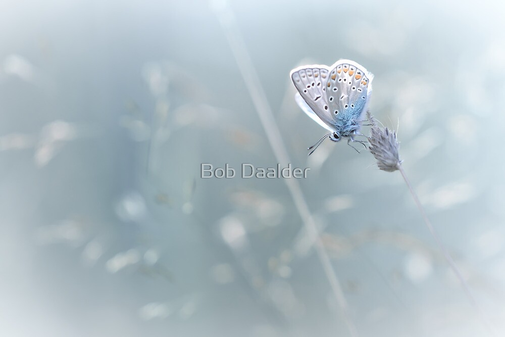 This doesn't feel like BLUES by Bob Daalder